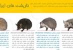 1366042748_kharposht-infographic-s