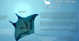 1380983629_sofremahi_infographics.ir_254_134