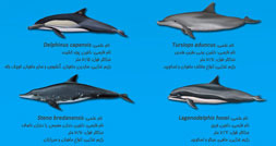 1407310121_dolphin-13-0
