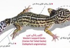 1409644634_geko-iran-0