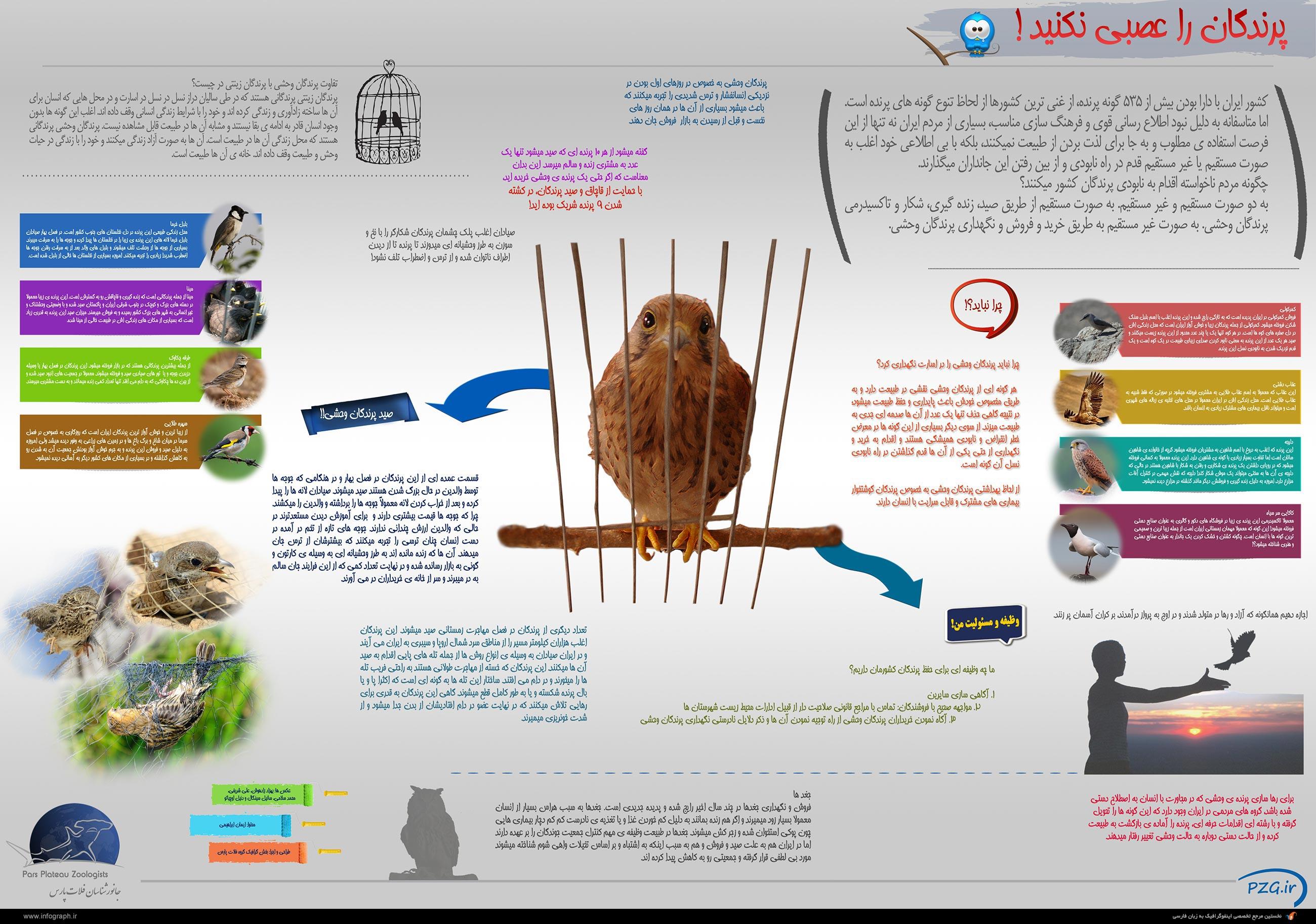 اینفوگرافیک انواع پرندگان در ایران