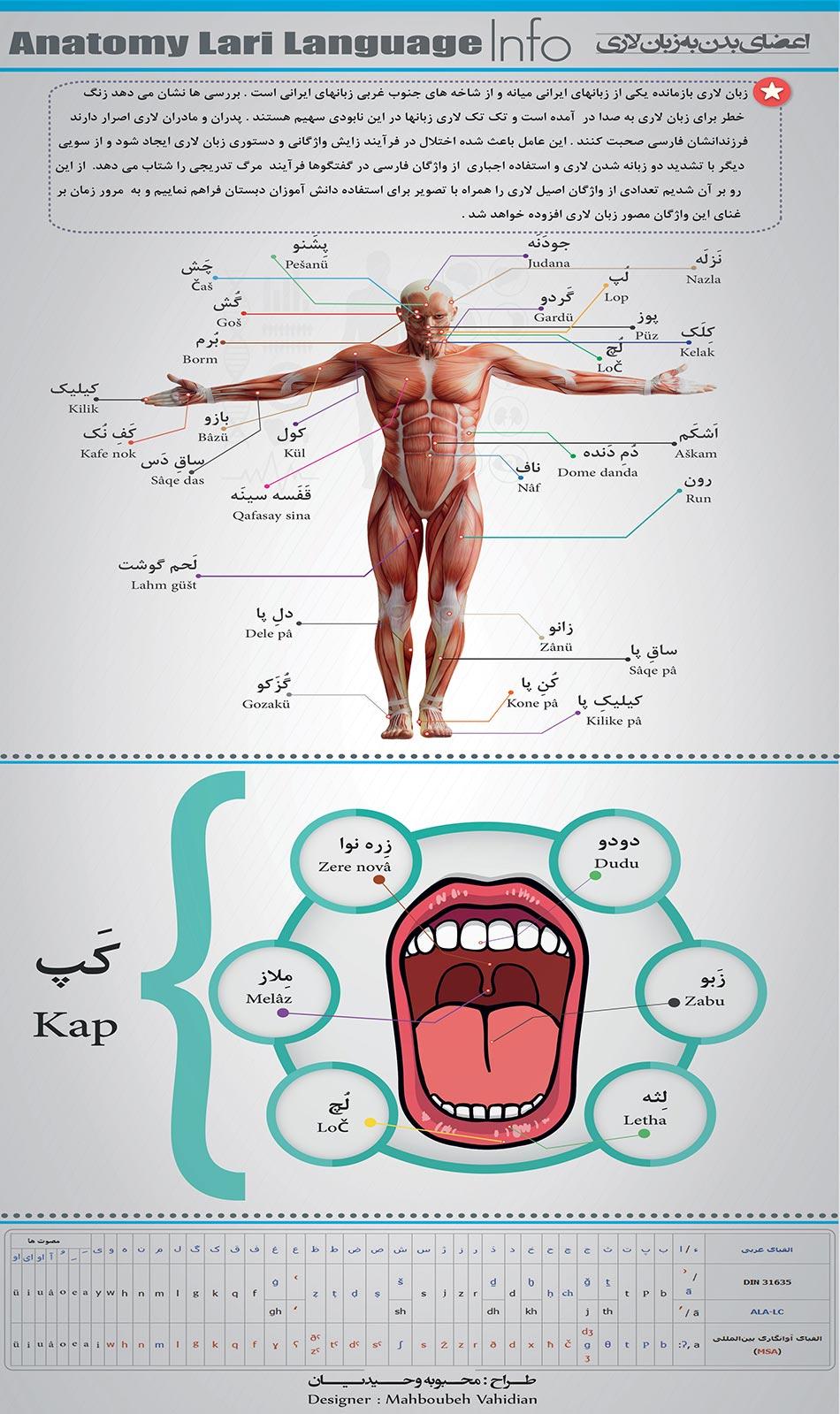اینفوگرافیک اعضای بدن به زبان لاری