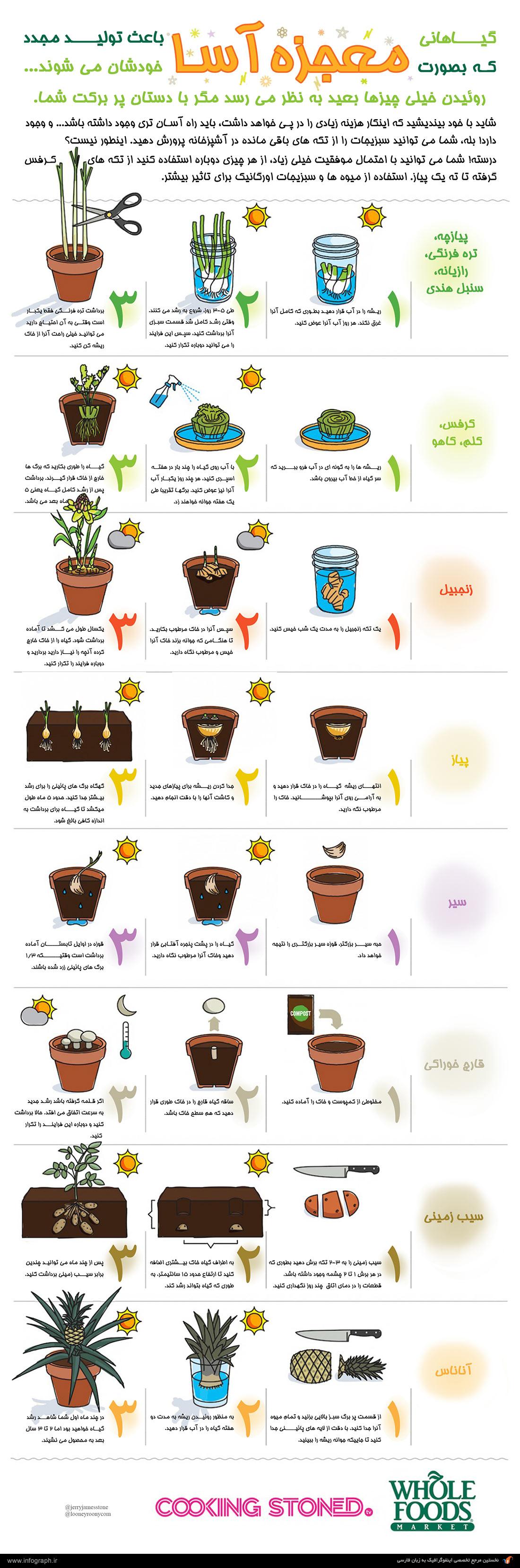 اینفوگرافیک گیاهان معجزه آسا