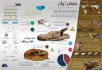 اینفوگرافیک مارهای ایران
