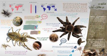اینفوگرافیک عنکبوت در مقابل رتیل
